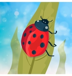Cute ladybug on green leaf vector