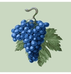 Cluster of grapes with a leaf vector