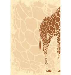 Backside of giraffe vector image
