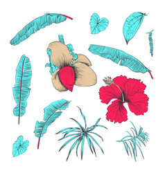 Hand drawn of tropical plants and flower vector