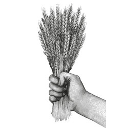 hand with malt in stippling technique vector image vector image