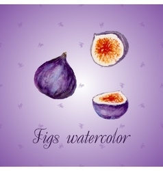 Watercolor fruits Fig vector image