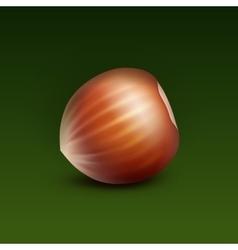 Full unpeeled hazelnut on green background vector