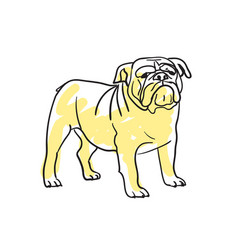 English bulldog hand drawn isolated icon vector