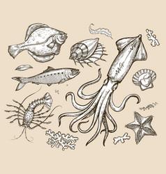 Hand drawn sketch set seafoodunderwater world vector