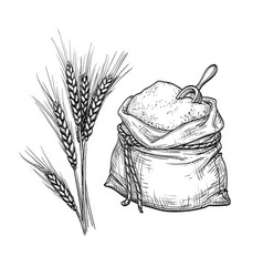 Wheat and sack of flour vector