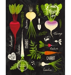 Root vegetables with leafy tops set for design on vector