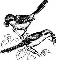 bird lanius vector image vector image