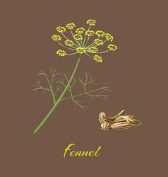 Fennel flowers leaves and seeds vector
