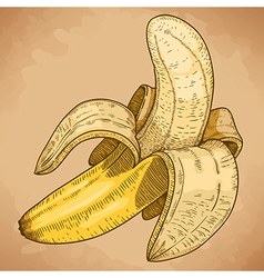Engraving banana retro vector