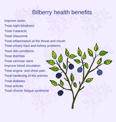 Bilberry ripe vector