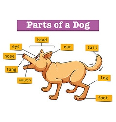 Different parts of domestic dog vector