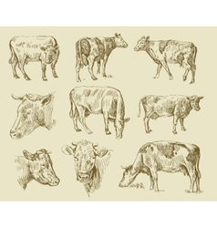 Cows hand draw vector