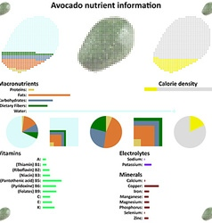 Avocado nutrient information vector