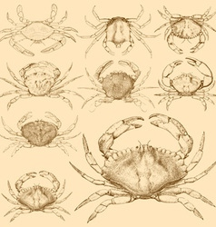 Set of 9 vintage engraved crabs vector