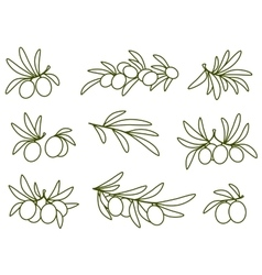 Linear olive branch set vector