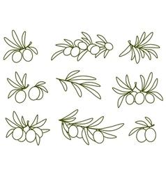 linear olive branch set vector image vector image