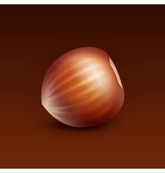 Full unpeeled hazelnut on brown background vector