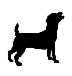 Jack Russel Terrier Silhouette vector image vector image