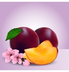 Whole ripe plums fruit vector
