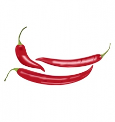 Chili peppers vector