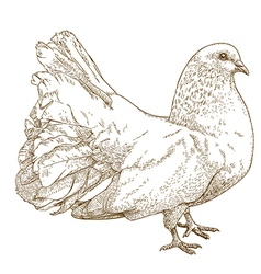Engraving white dove vector