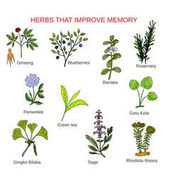 Medicinal herbs that improve memory vector