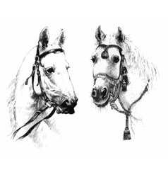 Set of black and white ink hand drawn horses heads vector image