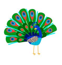 Cartoon peacock bird icon vector