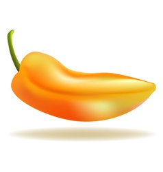 Yellow pepper vector