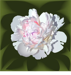 White realistic paeonia flower vector
