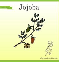 jojoba branch with fruits vector image