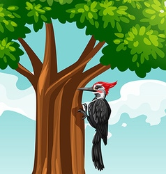 Woodpecker on the tree vector