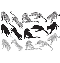 Set of leopard on a white background vector