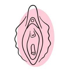 Vagina vector image vector image
