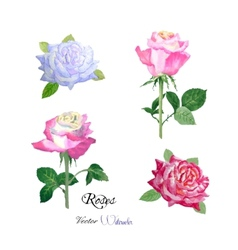 Roses watercolor flowers vector