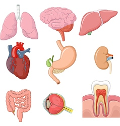 Cartoon of internal human organs collection set vector image