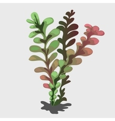 Tropical plant with color transition vector