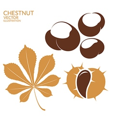 Chestnut vector image vector image