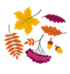 autumn leaves set colorful collection silhouettes vector image