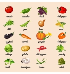 Vegetables from garden set vector