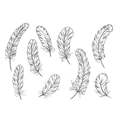 Outline bird feather icons vector image