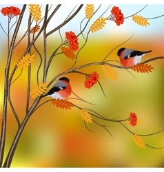Autumn card with bullfinches sitting on rowan tree vector