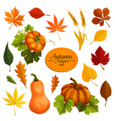 Autumn icons of leaf fall and harvest vector