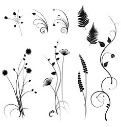 collection for designers meadow plants set vector image vector image