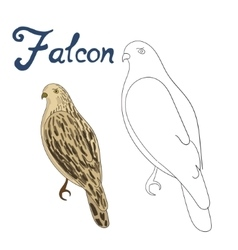 Educational game coloring book falcon bird vector