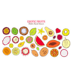 colored sketch natural exotic products collection vector image
