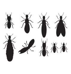 set of black silhouettes termites on a white vector image