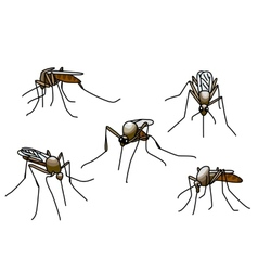 biting mosquitoes vector image
