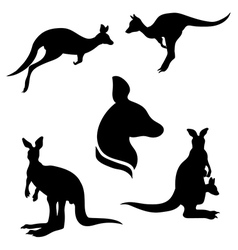 Kangarooset vector